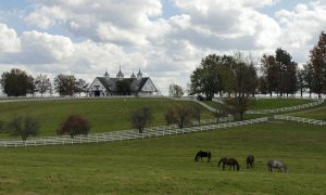 My-Old-Kentucky-Home